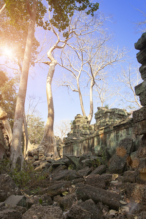 Jungle tree covering the stones of the temple ruins in Angkor Wat (Siem Reap, Cambodia),12th century Stock Photo