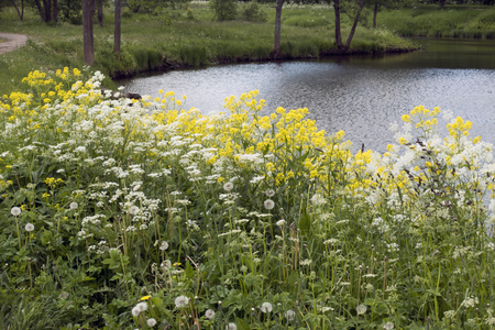 yellow and white wild flowers about  the lake in the park Stock fotó