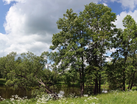 Beautiful summer landscape with trees on the bank of the lake, a meadow and the wood on the background Stock fotó