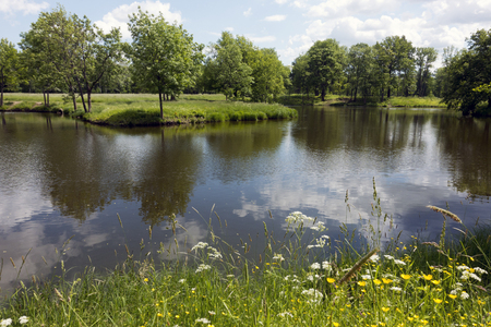 Beautiful summer landscape with trees on the river bank, a meadow and the wood