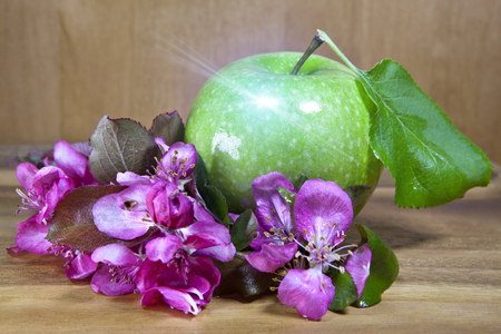 green ripe apple and crimson apple tree flowers on wooden background