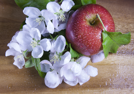 Apple tree flowers white  with green leaves and red ripe apple Stock fotó