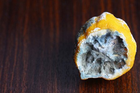 penicillium: the lemon in the mold on the table Stock Photo