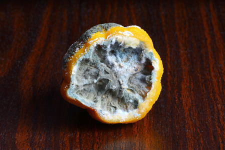 saprophyte: the lemon in the mold on the table Stock Photo