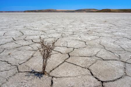 Dry cracked earth. The desert. Background.