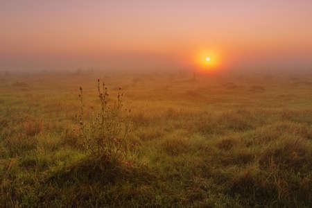 Summer morning dawn in the field Stock fotó