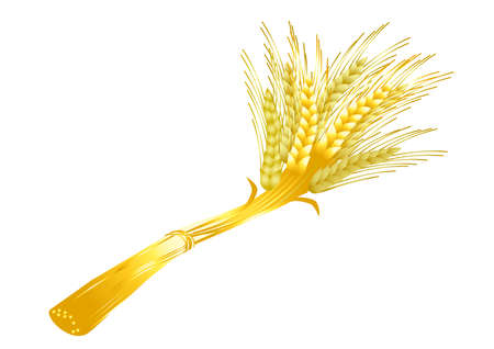 Sheaf of wheat on a white background  photo
