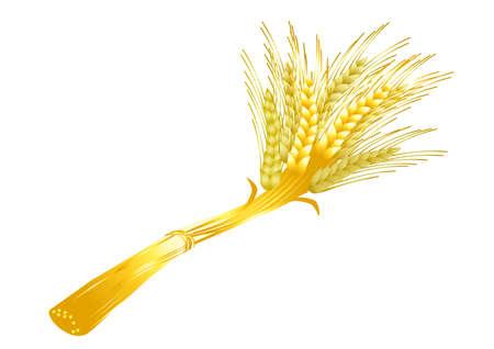 Sheaf of wheat on a white background  photo