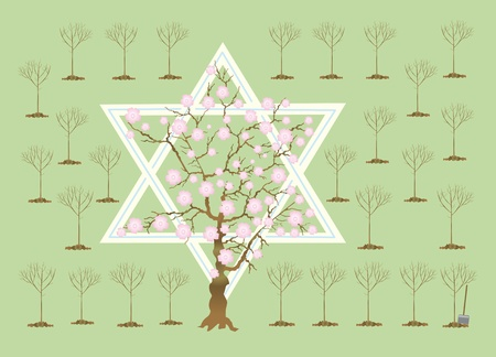 jewish star: In Israel in Tu bi-shvat ( Stock Photo