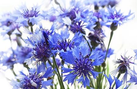 흰색 배경에 어두운 푸른 필드 색상의 꽃다발