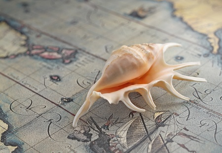 Marine shell from tropical Maureies on an old-time map photo