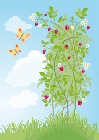 fruit stalk: Bush of raspberry on a background sky with butterflies