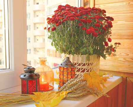 Creation of autumn mood on a balcony by candlesticks, bunch of wheat, yellow leaves and bush of chrysanthemums Stock Photo