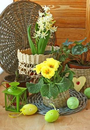 cowslip: Easter decoration of balcony from a hyacinth, primrose, easter eggs and cyclamen