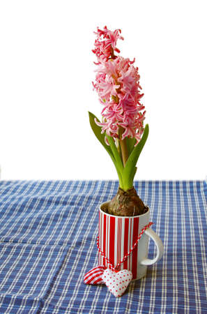 Hyacinths in a beautiful pot on a white background Stock Photo - 13557967