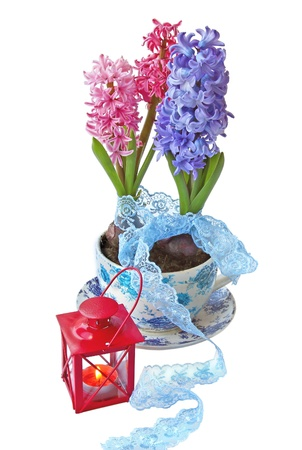 Hyacinths in a beautiful pot with a lace ribbon and flashlight on a white background Stock Photo - 13557959