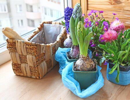 marguerites: Decoration of balcony hyacinths, marguerites and primrose Stock Photo