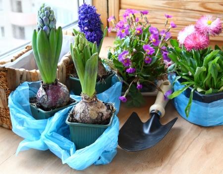 발코니에 발코니 히아신스의 마거리트와 앵초 봄 꽃 장식