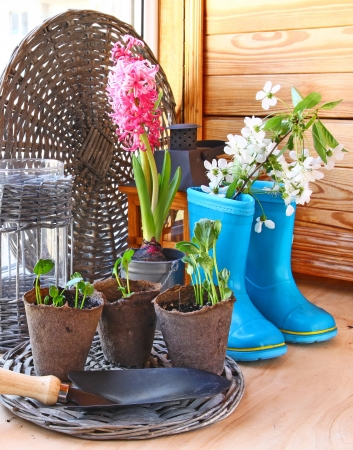 Growing and flowering of balcony  Infatuation for gardening on a balcony photo