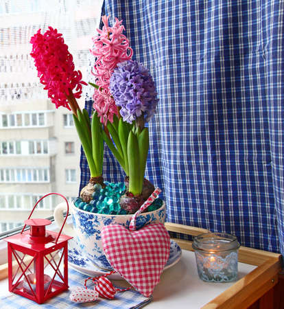 conflagrant: Beauty hyacinths and lantern with a conflagrant candle on a window in eve Advent