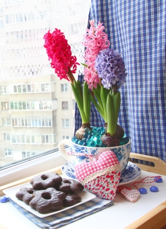Hyacinths in a beautiful pot with a chocolate thin captain on a window photo