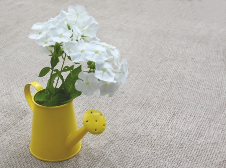 wateringcan: Rural still life summer bouquet from white phloxes in a yellow watering-can on a canvas table Stock Photo