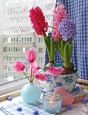 conflagrant: Beauty hyacinths and cyclamens with a conflagrant candle on a window