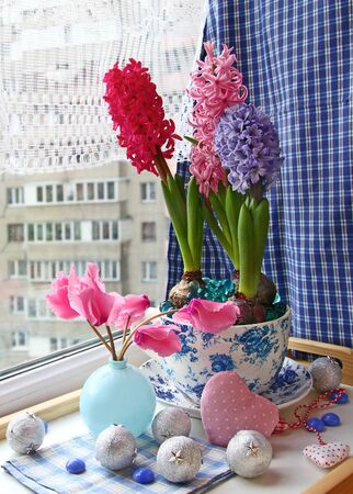 Beauty hyacinths and cyclamens on a window in eve Advent Stock Photo - 14881893