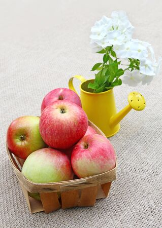 Rural still life with small basket of apples and bouquet of white phloxes in a watering-can on a canvas background photo
