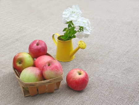 wateringcan: Small basket of apples and bouquet of white phloxes in a watering-can on a canvas background