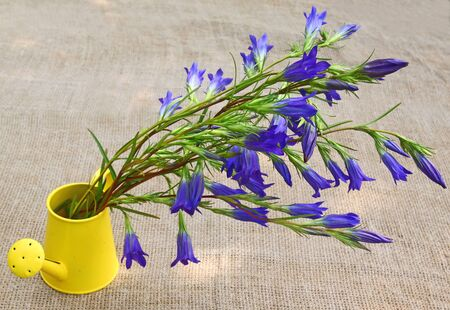 Bouquet of blue gentian in a yellow decorative watering can against a canvas