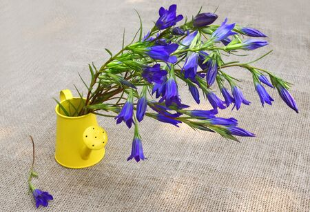 Bouquet of blue gentian in a  watering can against a canvas