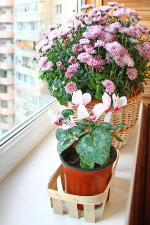 Room plant in a basket on a balcony photo