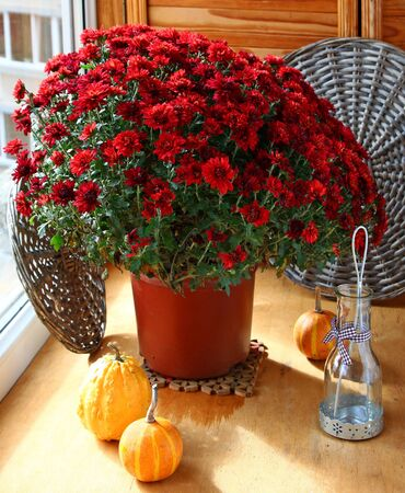 Bunch of chrysanthemums, pumpkin and a lantern on a balcony photo
