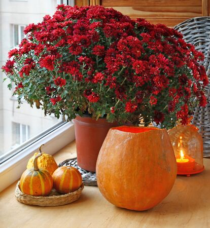 Bunch of red chrysanthemums and pumpkins with an orange lantern-candlestick. photo