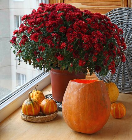 Bunch of red chrysanthemums and pumpkins on a balcony. photo