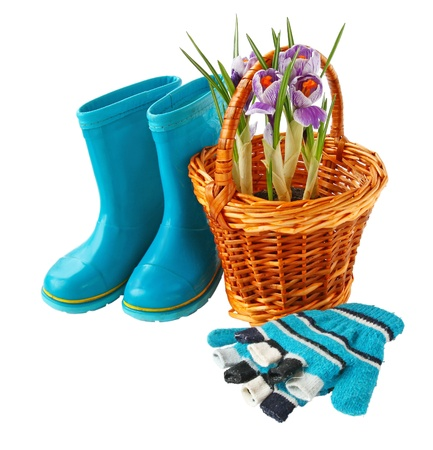 Small basket with crocuses and mittens it is isolated on a white background Stock Photo - 17748968