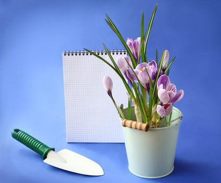 White crocuses and shovel on a background the clean sheet of paper for text Stock Photo - 18058490