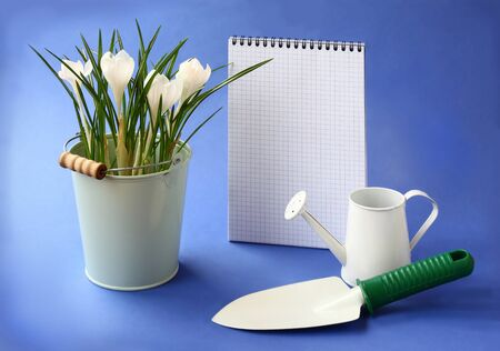 wateringcan: White crocuses, shover and watering-can on a background the clean sheet of paper for text Stock Photo