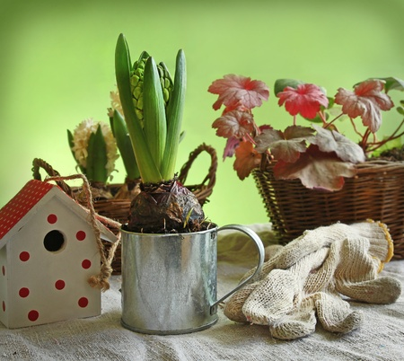Still life with hyacinth, decorative birdhouses and gloves for the job. photo