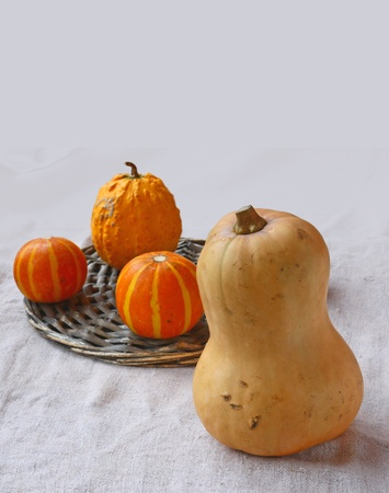 Ornamental cabbage and pumpkins on ring on a background a canvas photo