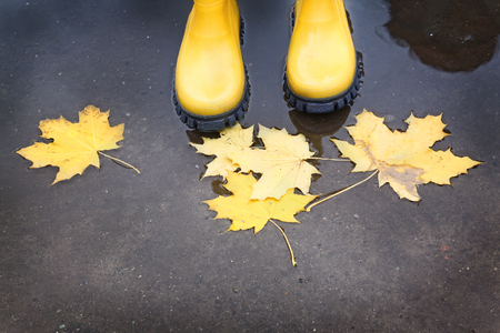 Feet in yellow rubber boots standing in a puddle, where yellow leaves float