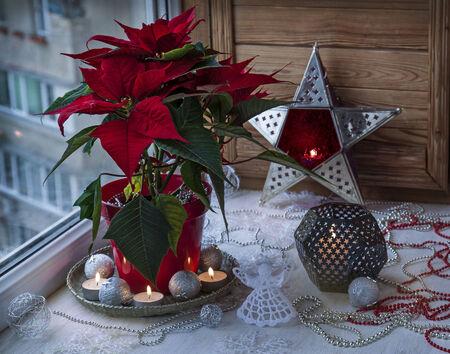 pulcherrima: Eve Advent. Christmas star  (Euphorbia pulcherrima) on the window and Christmas decor Stock Photo