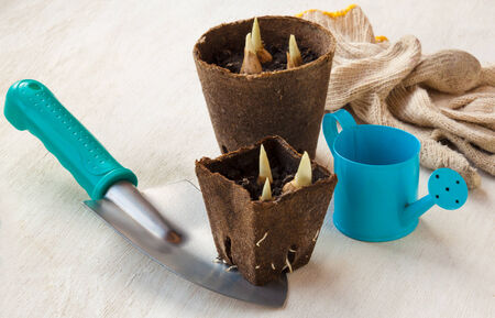 Garden still life with watering, peat pots with plants and gardening gloves Stock Photo