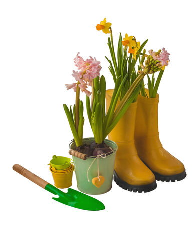 Yellow daffodils, pink hyacinth, garden spade and rubber boots isolated on white background photo