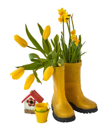 Yellow daffodils and tulips, decorative birdhouse and rubber boots isolated on white background