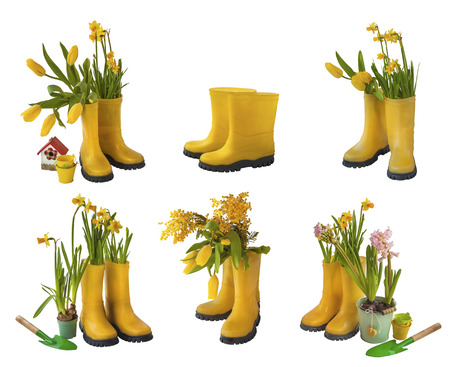 Set 6 pair of yellow gumboots and daffodils, tulips, mimosa, garden shovel  isolated on white background photo