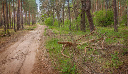 Road in the forest spring day photo