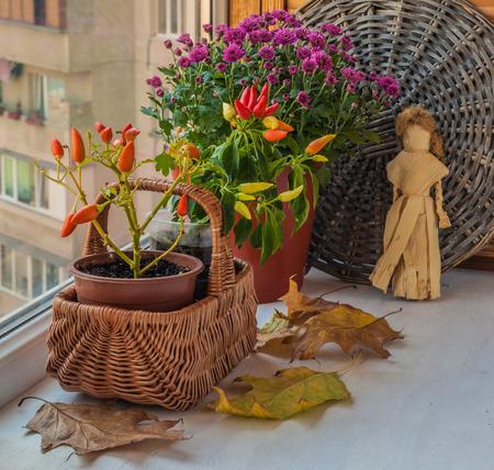 autumn arrangement: Autumn arrangement from decorative pepper and chrysanthemums on the window