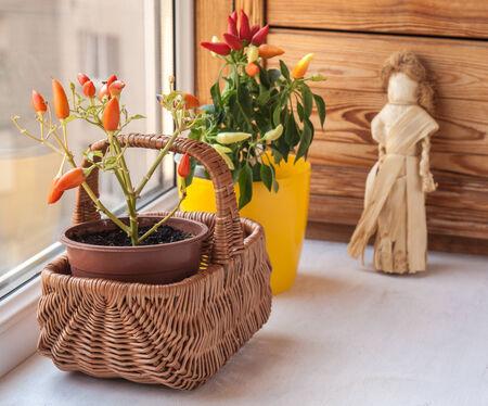 autumn arrangement: Autumn arrangement of peppers on the window Stock Photo